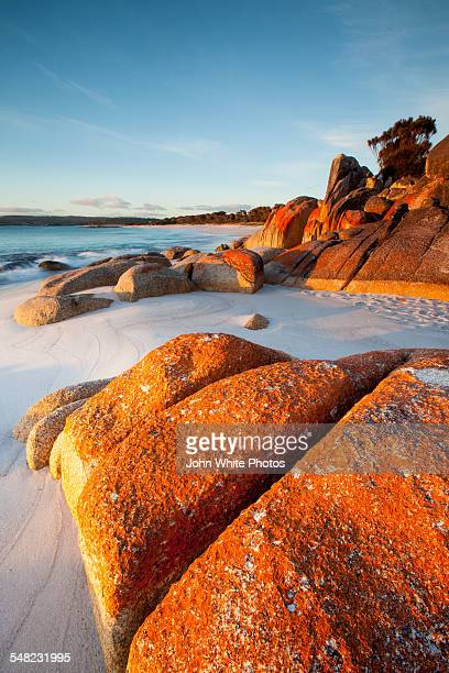 bay of fires,tasmania, australia - hobart tasmania stock pictures, royalty-free photos & images