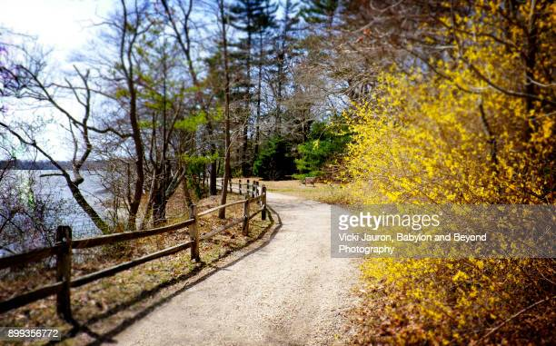 bayard cutting arboretum in early spring - arboreto foto e immagini stock