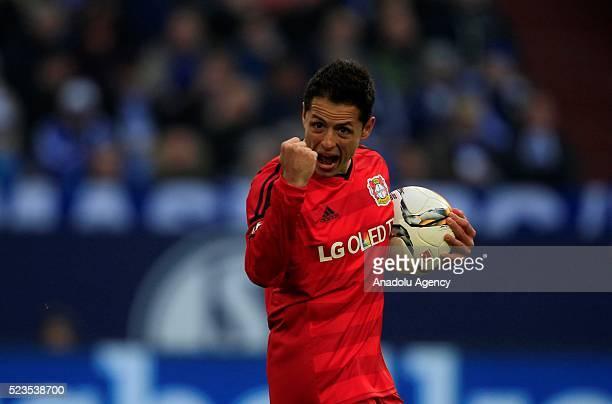 Bayer 04 Leverkusen's Chicharito celebrates scoring a goal during the Bundesliga soccer match between FC Schalke 04 and Bayer 04 Leverkusen at the...