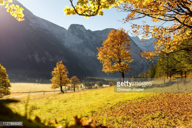 bayerische alpen - großer ahornboden - sorglos stock pictures, royalty-free photos & images