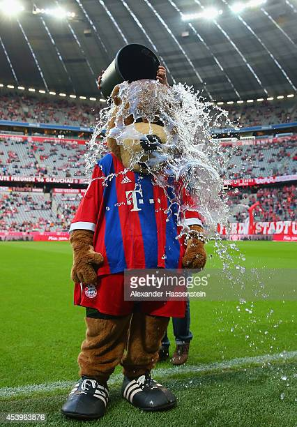 Bayern Munich's mascot Bernie takes part in the 'ice bucket challenge' ahead of the Bundesliga match between FC Bayern Muenchen and VfL Wolfsburg at...
