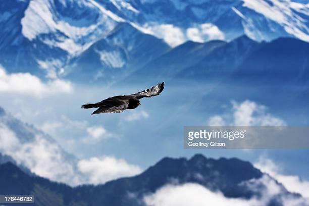 Bayern - Nebelhorn..sommet des alpes allemandes