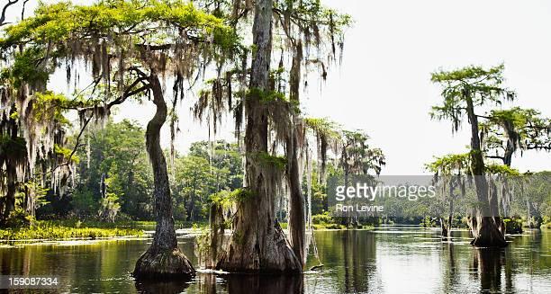 Bayou landscape in southern Mississippi