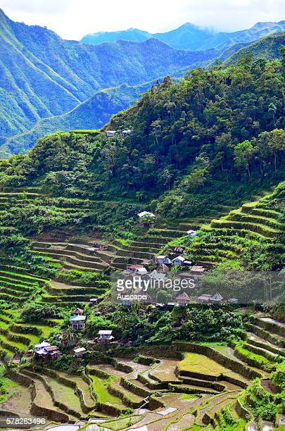 Bayyo rice terraces on a steep mountainside Bontoc Mountain Province Luzon Philippines Southeast Asia