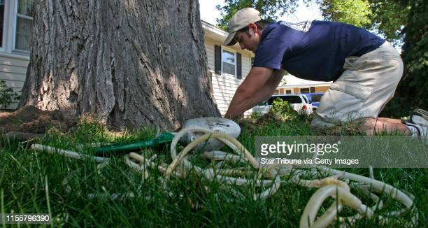 BISPING ¥ bbisping@startribunecom Bloomington MN Wednesday 6/27/2007 Derek Johnson of Rainbow Treecare installed injection tubing into the base of...