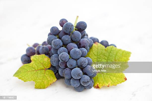 Bblue grape with leaf on white marble