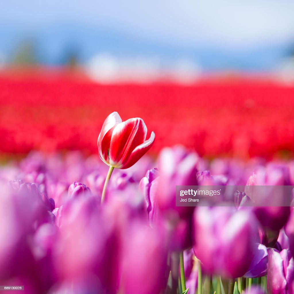 Be Different - Standing Out From The Crowd : Stock Photo