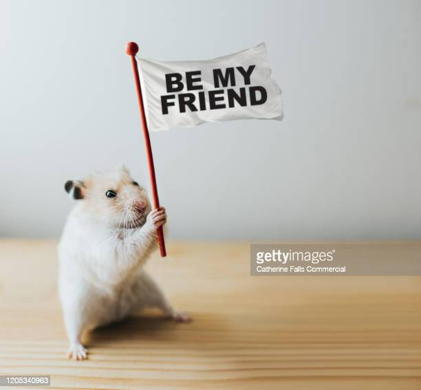 'be my friend' hamster - concepts stock pictures, royalty-free photos & images