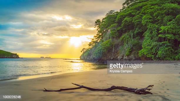 beach and jungle at sunset in costa rica - costa rica stock pictures, royalty-free photos & images