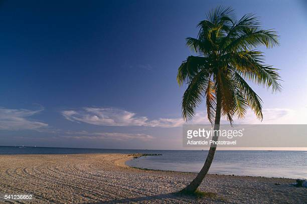 Beach and Palm Tree at Key West