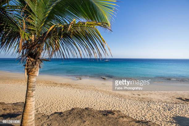 Beach and Palm Tree on Fuerteventura
