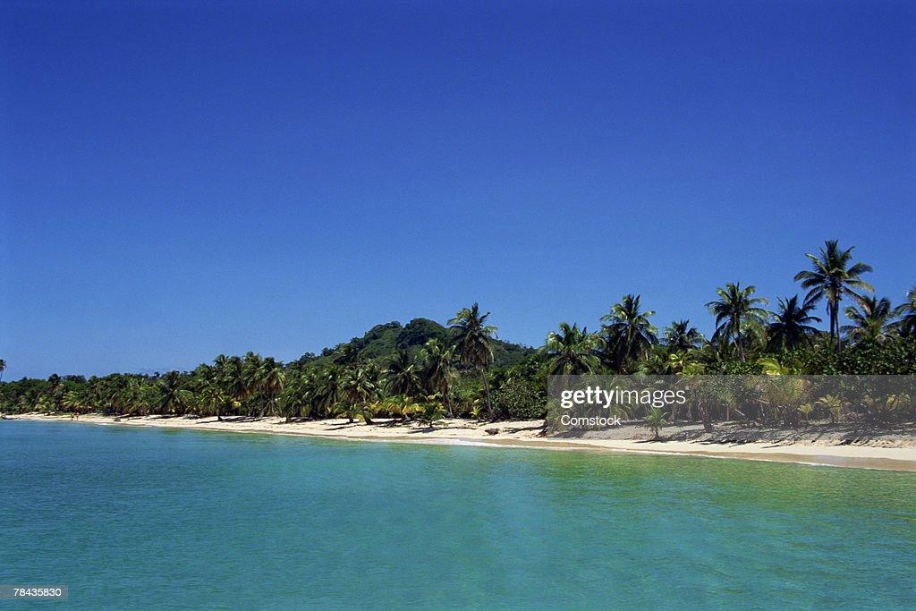 Beach and palm trees at Roatan Island , Honduras : Stockfoto
