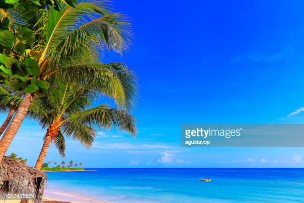 beach and rustic thatched roof palapa, montego bay - jamaica - caribbean sea - jamaica stock pictures, royalty-free photos & images