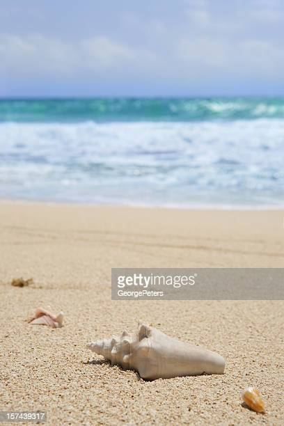 beach and shells - margarita beach stock photos and pictures