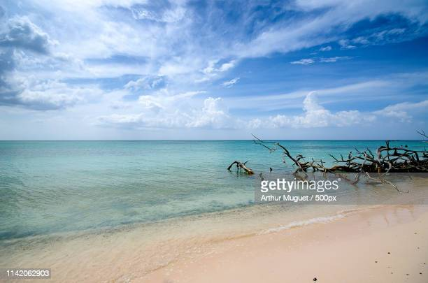 beach at cayo coco, cuba - muguet stock pictures, royalty-free photos & images