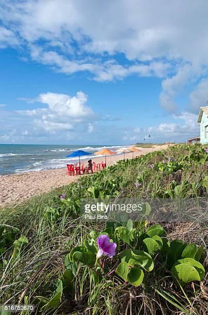 Beach at Costa do Sauipe, Bahia,Brazil