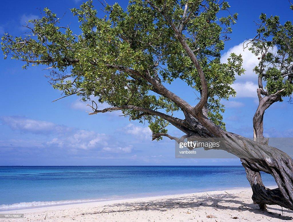 Praia em Cuba : Foto de stock