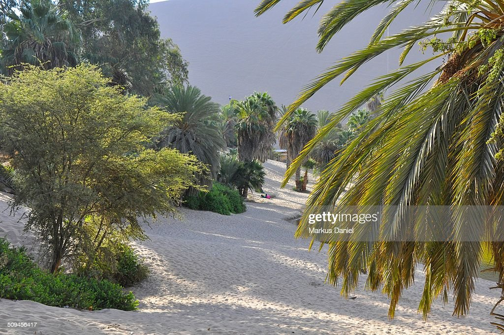 Beach at Huacachina Oasis in Ica, Peru : Stock Photo