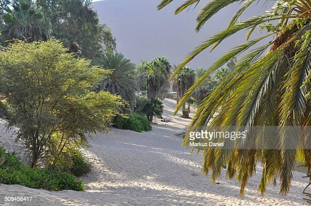 "beach at huacachina oasis in ica, peru - ""markus daniel"" fotografías e imágenes de stock"