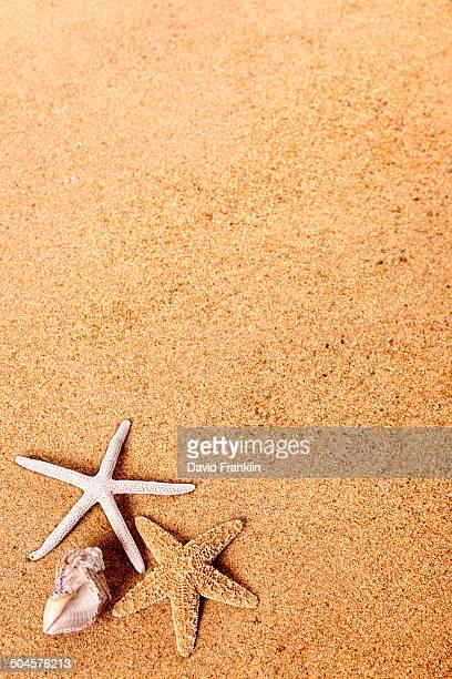 Beach background with starfish and seashell