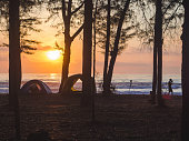 beach camping ground filled pine forest
