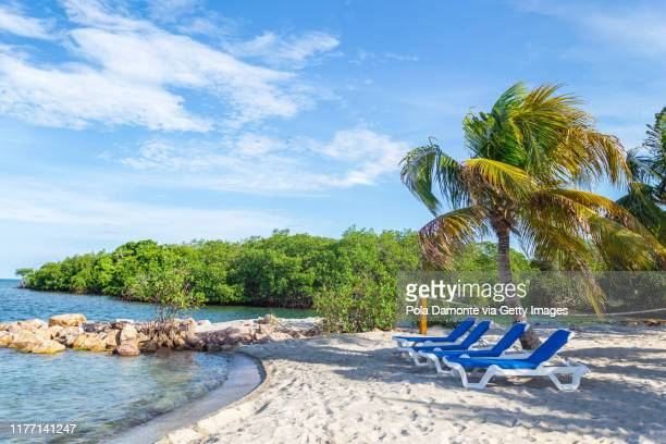 beach chairs in idyllic white sand beach in the caribbean sea in a sunny day, belize. - harvest caye stock pictures, royalty-free photos & images