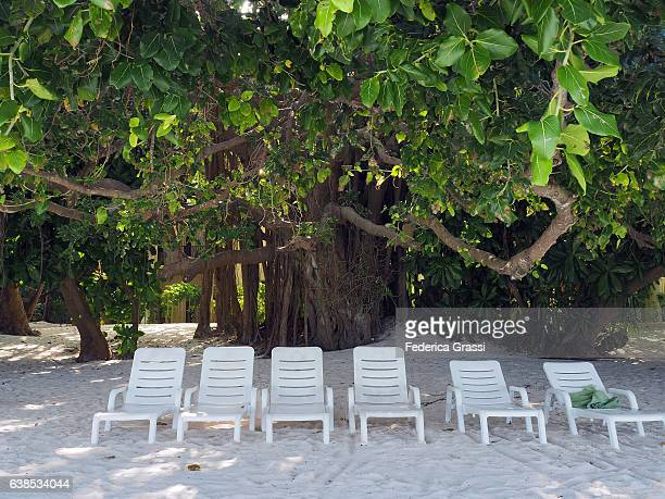 beach chairs on the beach at the maldives - chaise longue stock photos and pictures