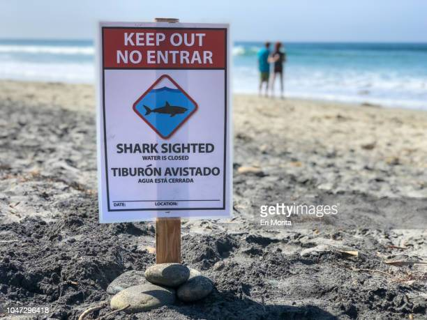 beach closure sign after shark attack. - shark attack - fotografias e filmes do acervo
