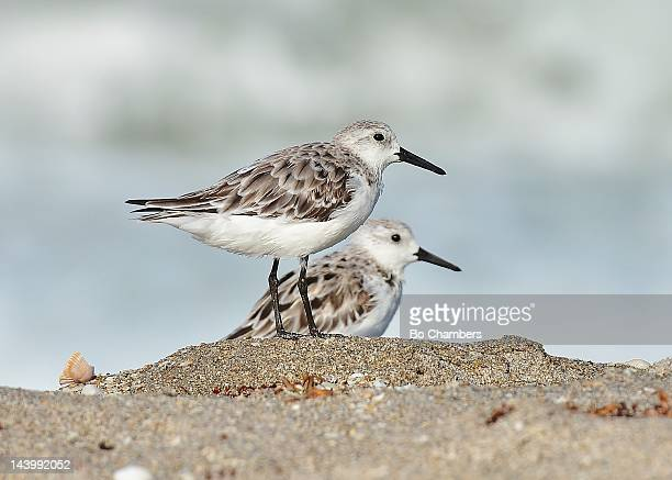 beach combers - stuart florida stock pictures, royalty-free photos & images