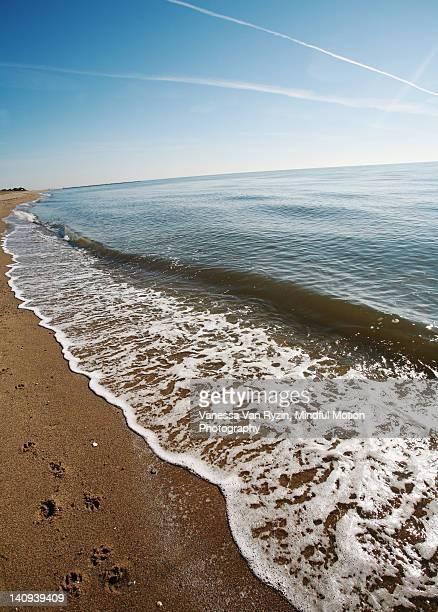 beach curve - vanessa van ryzin foto e immagini stock