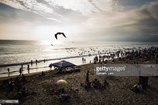 beach days - ephraim lem stock pictures, royalty-free photos & images