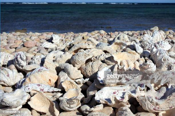 beach full of clam shells background - rafael ben ari stock-fotos und bilder