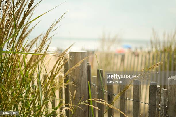 Beach grass and dune fence at Rehoboth Beach, DE