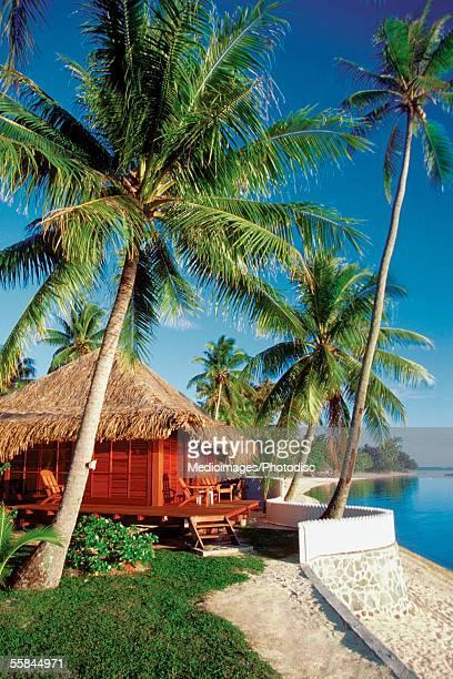 Beach hut behind a palm tree, Matira Hotel, Bora Bora, French Polynesia