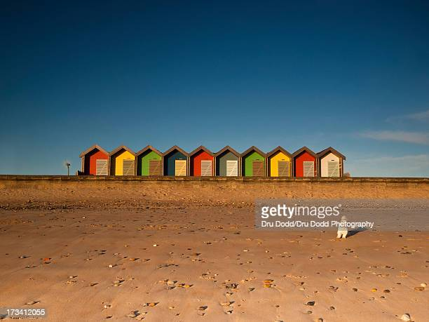 beach huts and a dog - blyth northumberland stock pictures, royalty-free photos & images