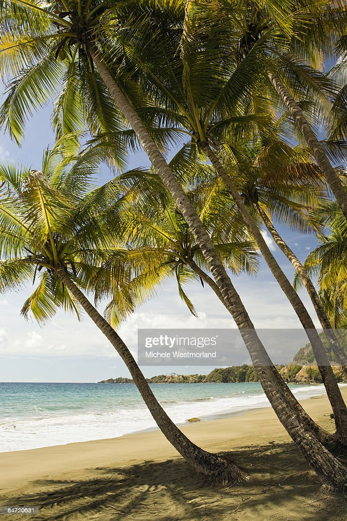 Beach in Barbados Bay, Tobago : Stock Photo