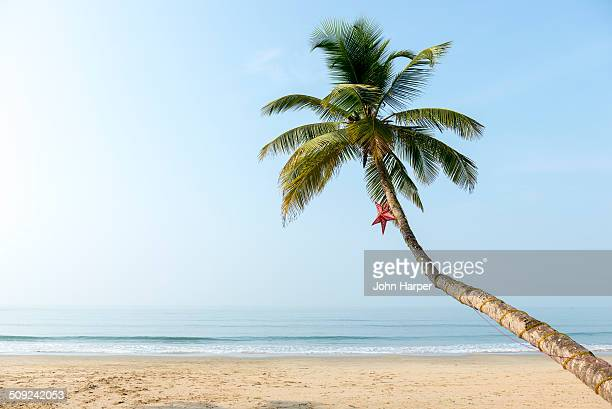 beach in goa, konkan, india - coconut palm tree stock pictures, royalty-free photos & images