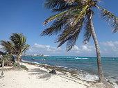 palm trees beach san andres island
