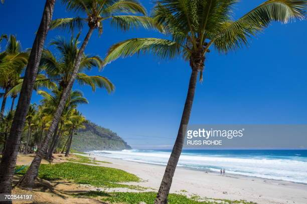 beach landscape with palm trees and indian ocean, reunion island - isla reunion fotografías e imágenes de stock