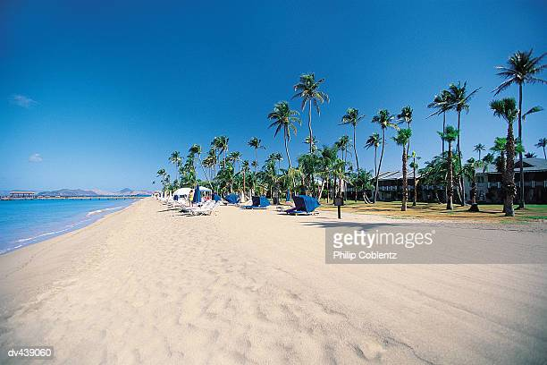 Beach lined with chairs and palm trees