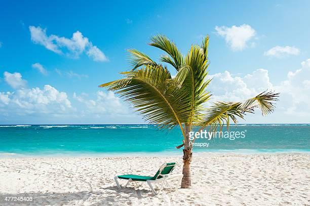 Beach lounger under palm tree