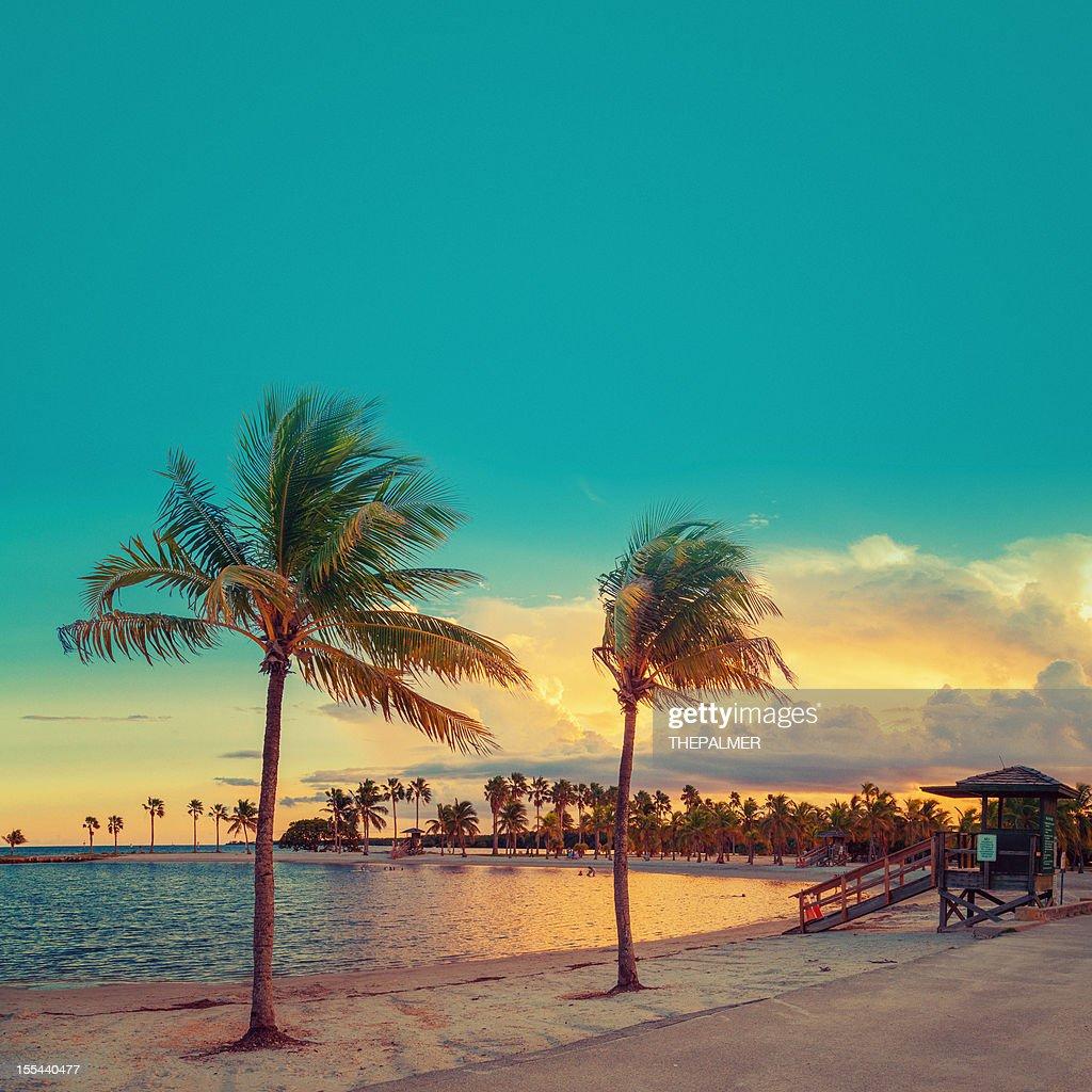 beach miami : Stock Photo