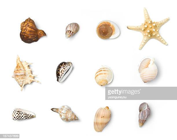 beach objects series - conch shell stock pictures, royalty-free photos & images