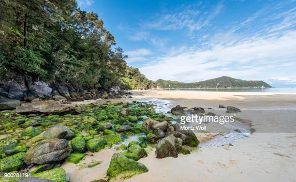beach, observation beach, abel tasman national park, tasman region, southland, new zealand - nelson city new zealand stock pictures, royalty-free photos & images