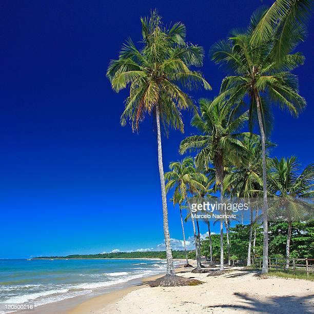 Beach of coconut trees, Trancoso