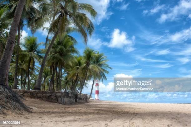 晴れた日、サルバドール、バイーア州、ブラジルにバック グラウンドでヤシの木とビーチの itapõa 灯台 - バイア州 ストックフォトと画像