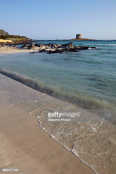 beach of la pelosa in stintino, sardinia - massimo pizzotti foto e immagini stock