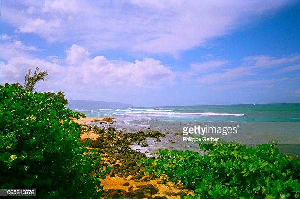 beach on oahu's north shore - waimea bay stock pictures, royalty-free photos & images