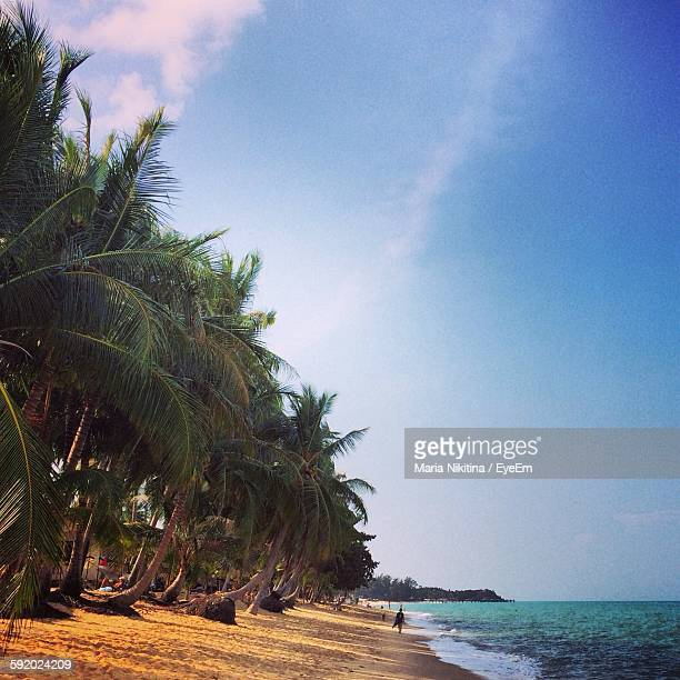 beach on sunny day - nikitina stock pictures, royalty-free photos & images