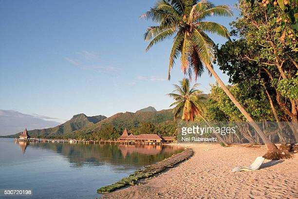 beach on tahiti - tahiti stock pictures, royalty-free photos & images